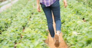 Incentivar o agronegócio é contribuir para o desenvolvimento