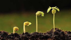 Benefícios dos Bio estimulantes