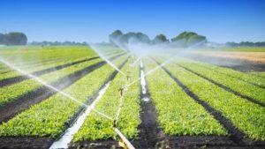 Governo do Paraná simplifica condições de uso da água na irrigação rural