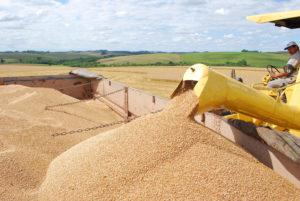 Momento é favorável à compra de trigo no Brasil