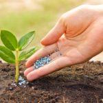 Fertilizante salva vidas, você sabia?