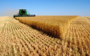 Colheita do trigo avança no Paraná e já cobriu 73% da área estimada para a safra atual